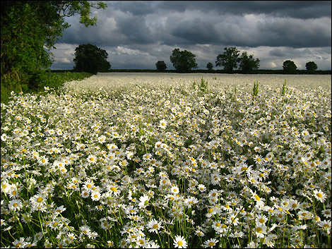 In which a 26 year old biblical mystery is solved Field Of Daisies