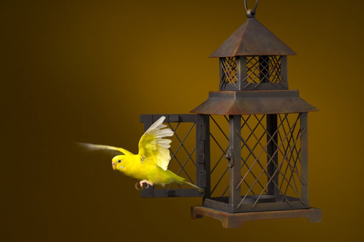 the gospel of Jesus flew out like a bird from a cage...