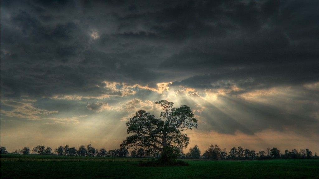 Dark-Sky-Tree-With-And-Light-Streams-Beautiful-Images
